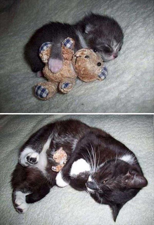 抱き合う猫 7