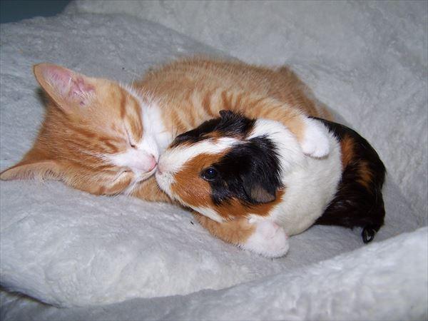 抱き合う猫 8
