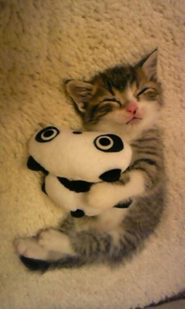 抱き合う猫 9
