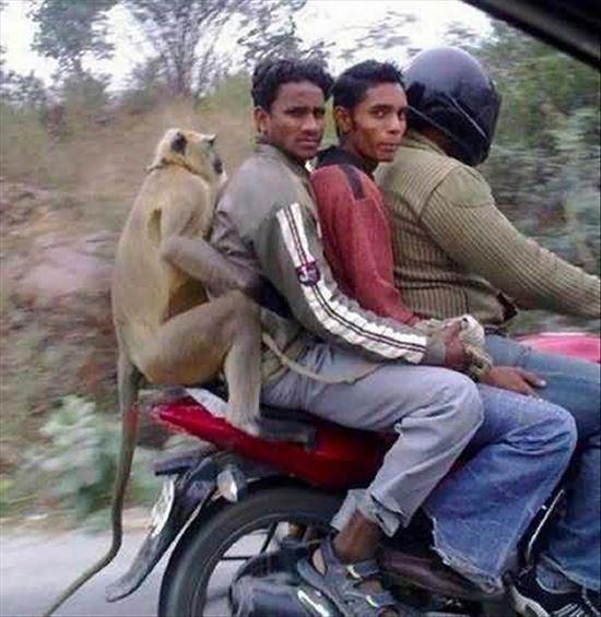 インドの日常 7