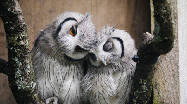 フクロウ画像 48