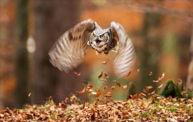 フクロウ画像 94