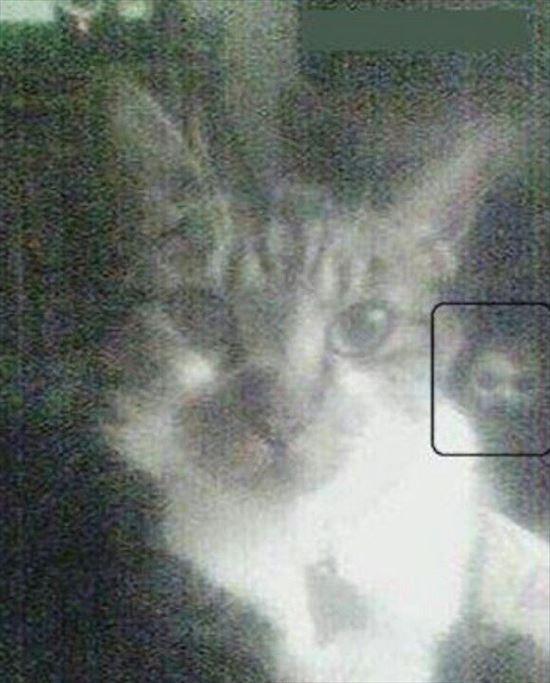 怖い画像 37