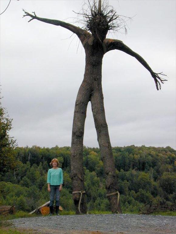 珍しい木 1
