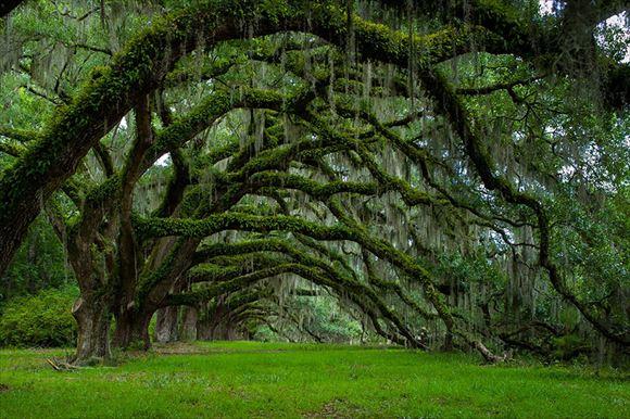 珍しい木 10