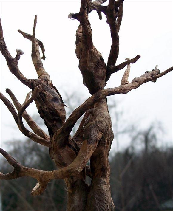 珍しい木 14