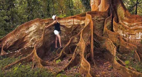 珍しい木 15