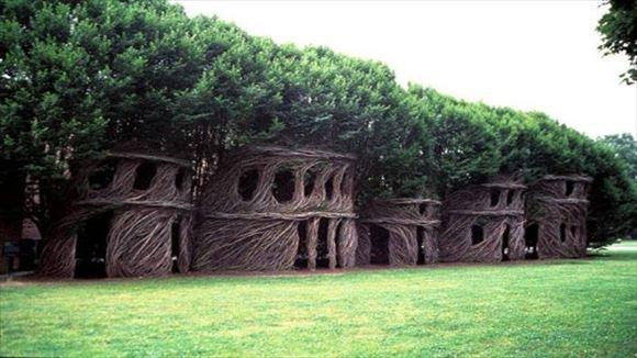 珍しい木 16