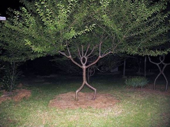 珍しい木 19