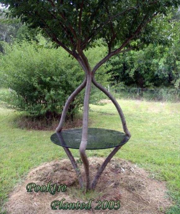 珍しい木 21