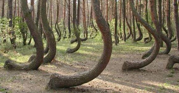 珍しい木 26