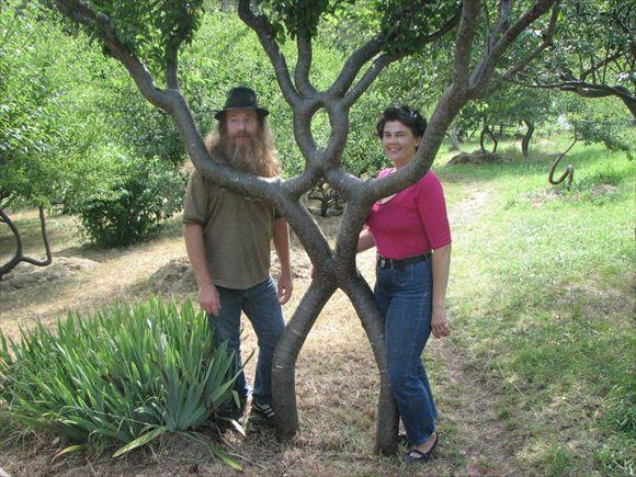 珍しい木 3
