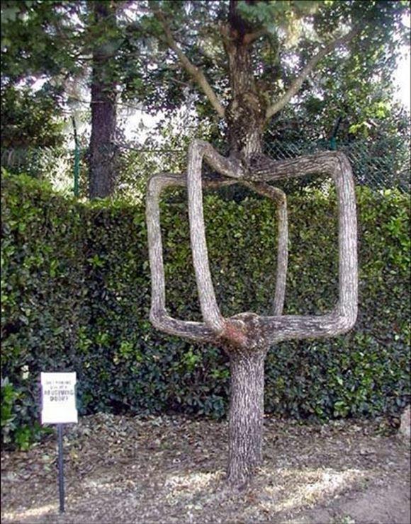 珍しい木 30