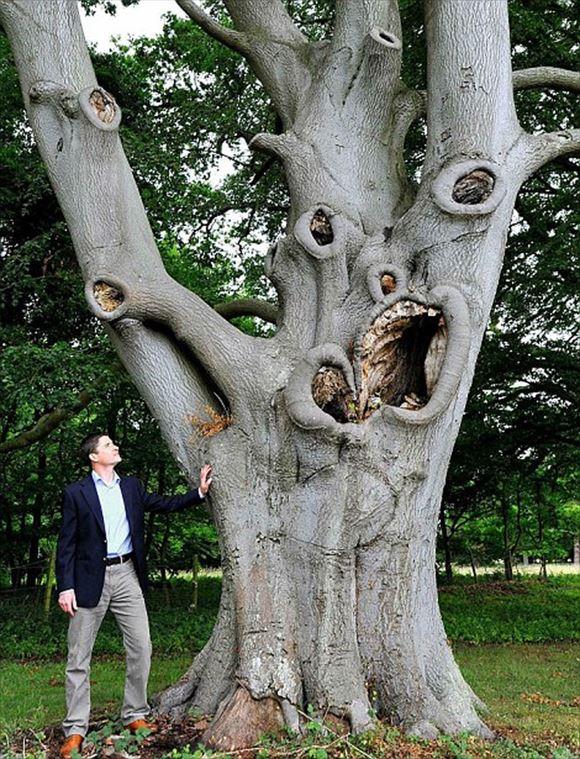 珍しい木 31