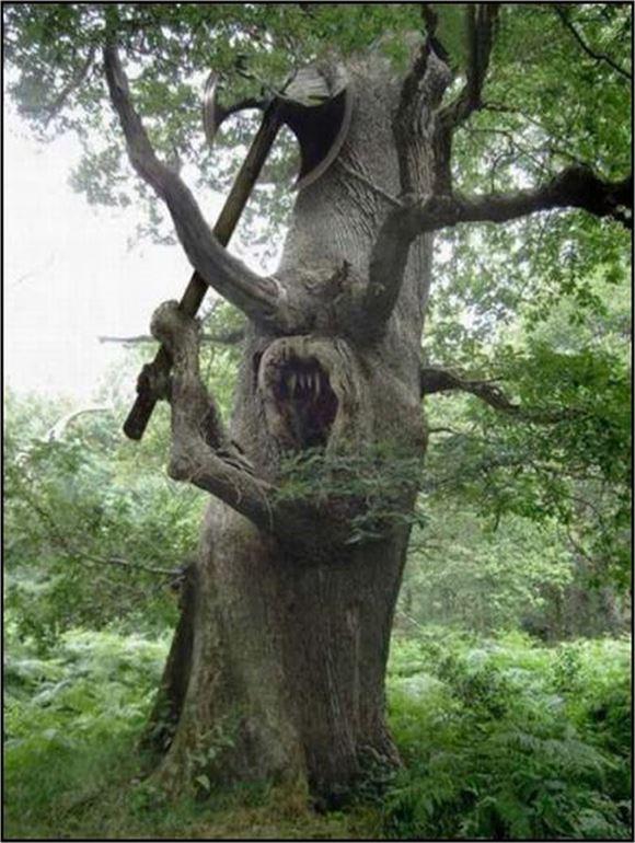 珍しい木 32