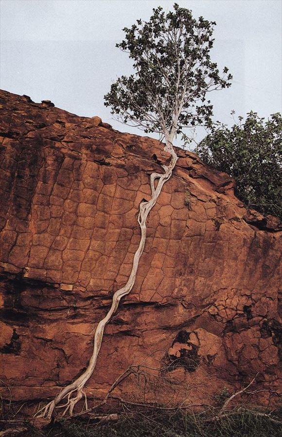 珍しい木 34
