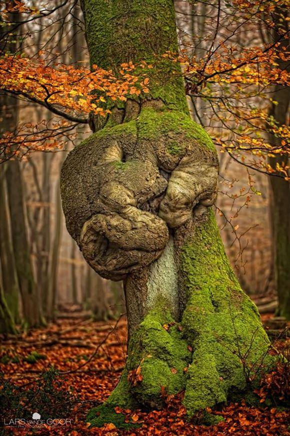 珍しい木 35