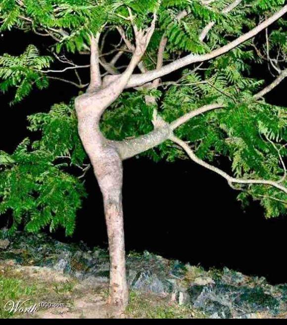 珍しい木 4
