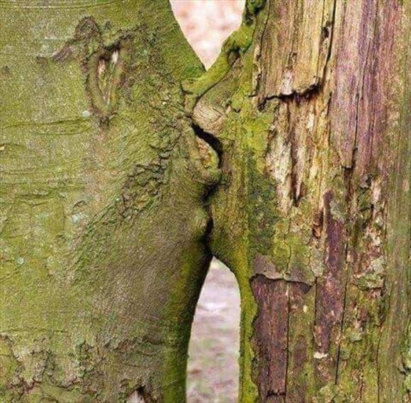珍しい木 40