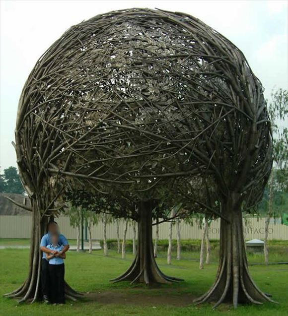 珍しい木 45