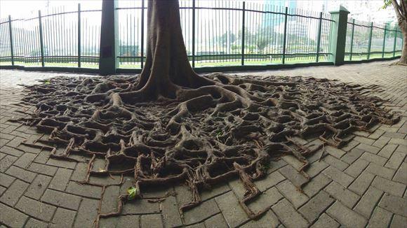 珍しい木 49