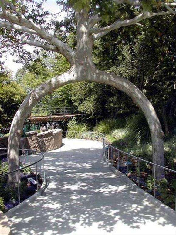 珍しい木 5
