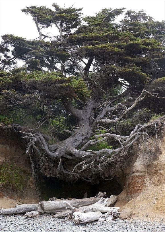 珍しい木 50