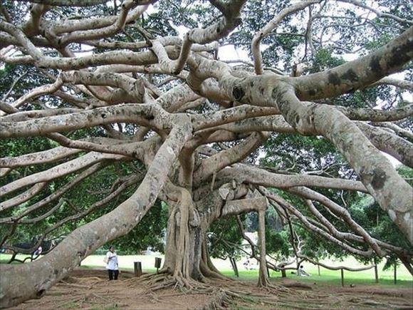珍しい木 52