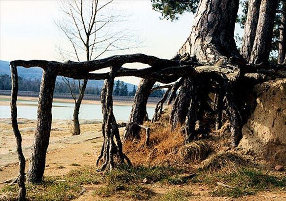 珍しい木 54