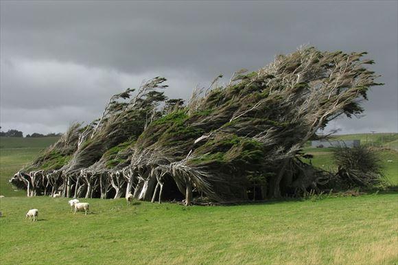 珍しい木 6