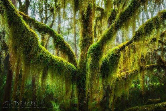 珍しい木 7