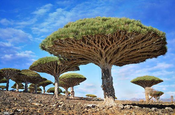 珍しい木 8