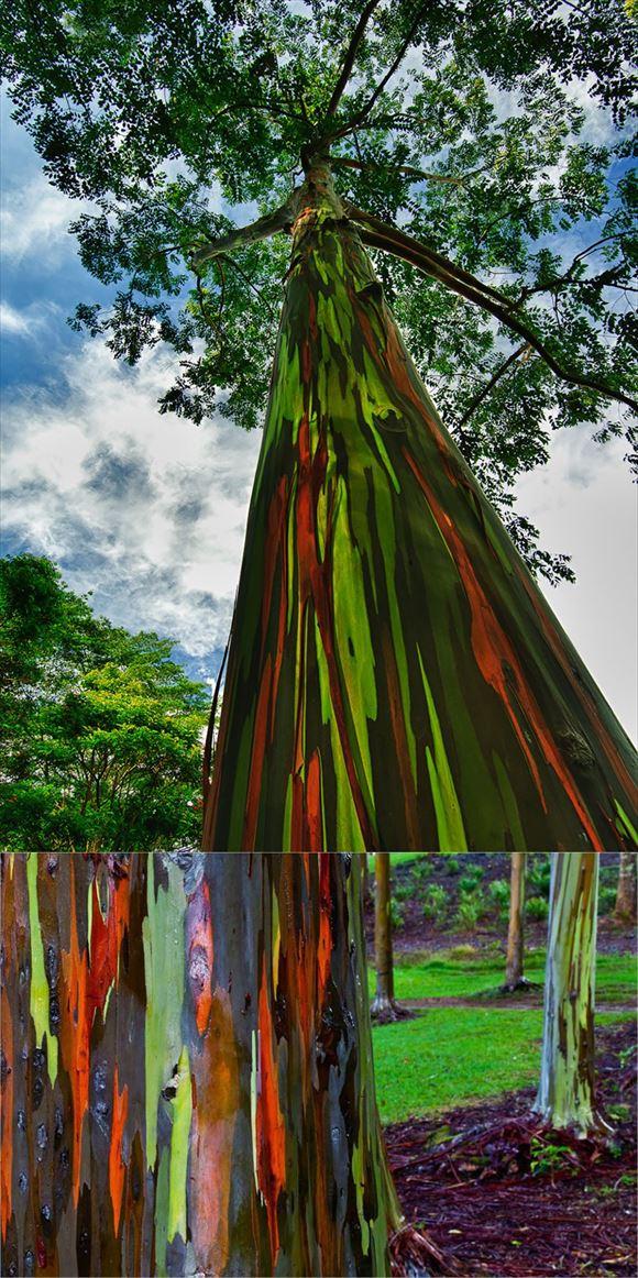 珍しい木 9.0