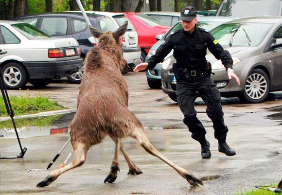 警察官画像 6