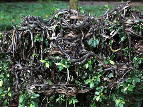 地球上で最も危険な島、猛毒ヘビに占拠さ ...